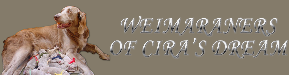 Of Cira's Dream logo
